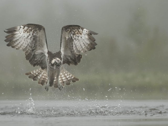 Osprey - Missed the Catch