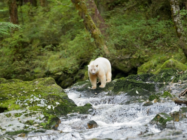 Spirit Bear - On The Edge