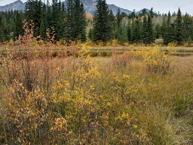 Cottonwood Slough - Warm Autumn Delight