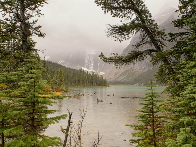 Cavell Lake - A Glimpse of Paradise