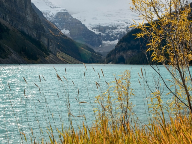 Lake Louise Through the Grass