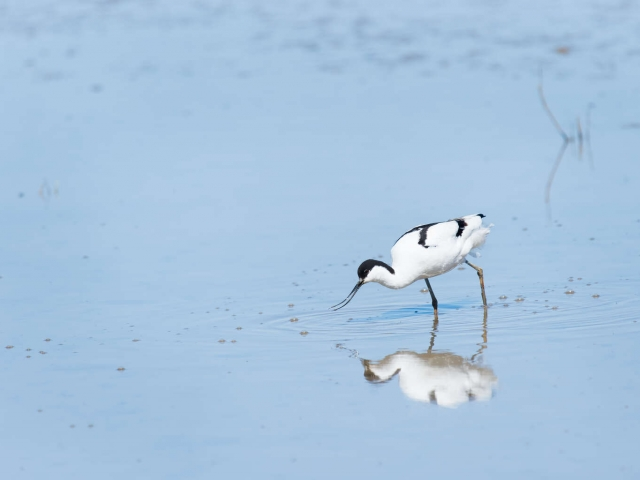 Avocet - Reflective Fishing