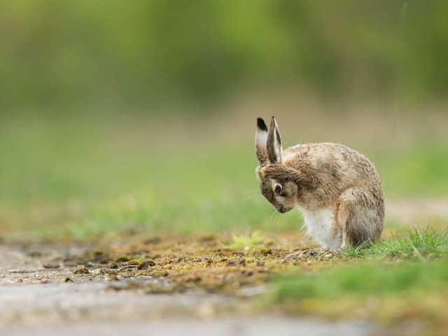 Hare - That Was Close