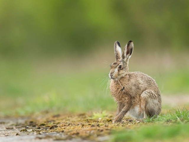Hare - Heres Looking at You
