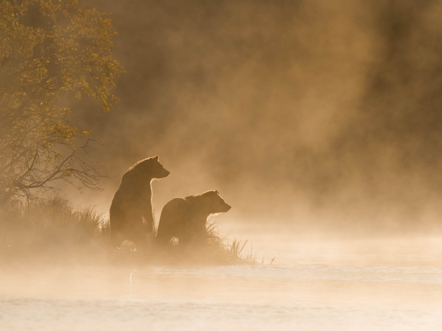 Grizzly Bear - On Golden Pond