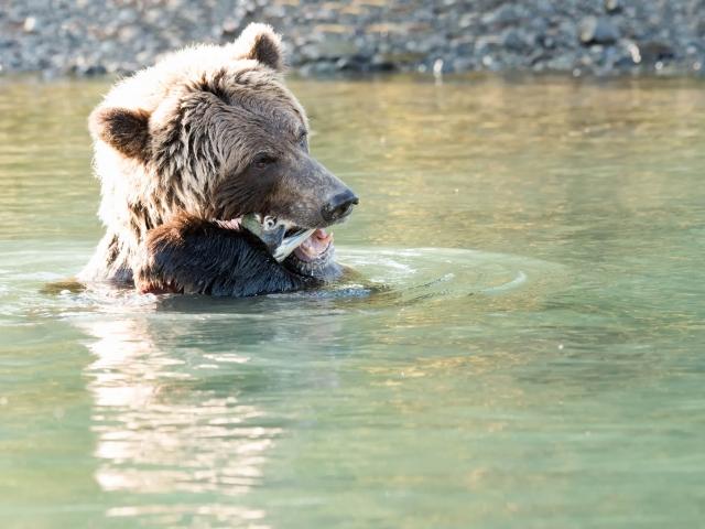 Grizzly Bear - Goodbye Cruel World