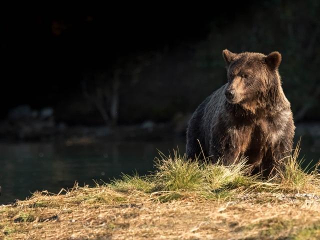 Grizzly Bear - Crow Pie