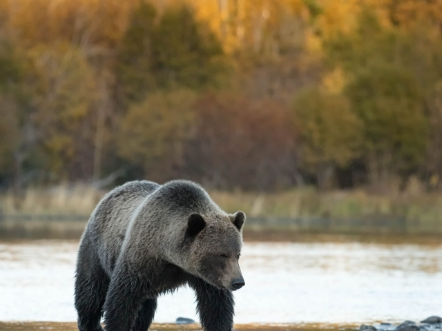 Grizzly Bear - Sad Times