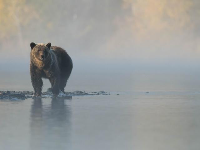Grizzly Bear - Dreamy Days