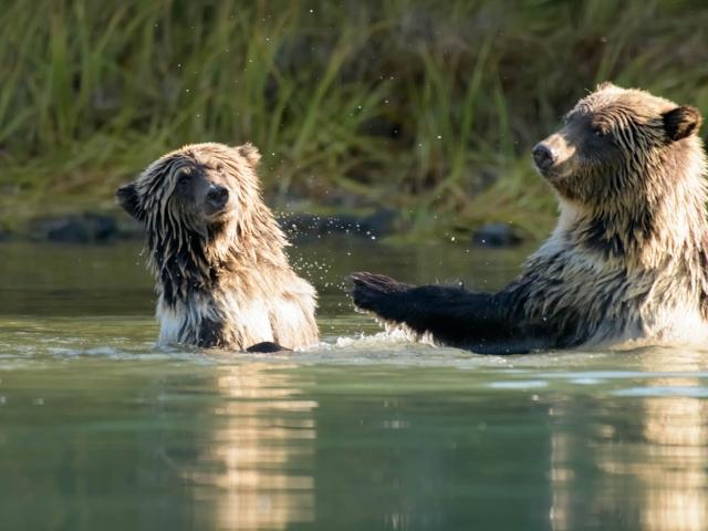 Grizzly Bear - Keep Back