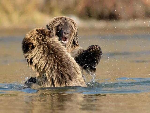 Grizzly Bear - Take That