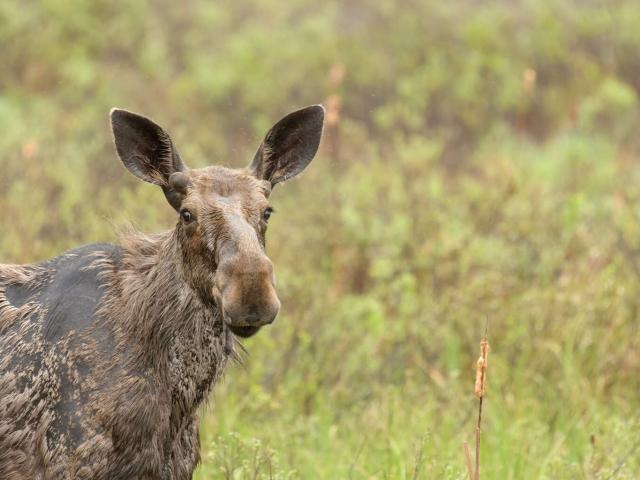 Moose - Im listening