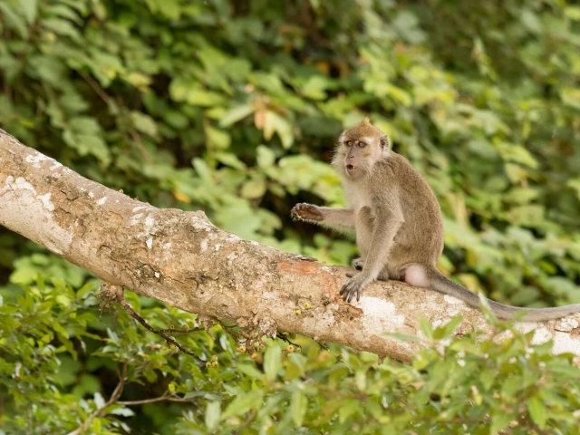 Long-tailed Macaque - Must go clean my hands
