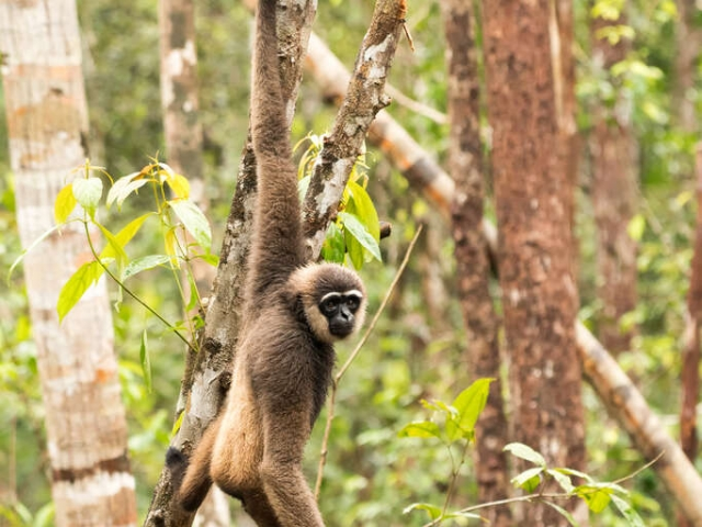 Agile Gibbon - Swinging Low