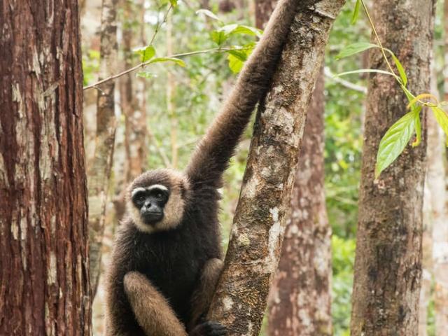 Agile Gibbon - Ready to Leap