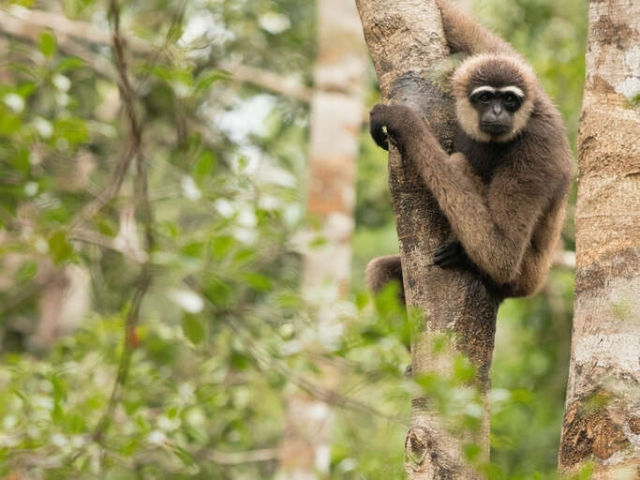 Agile Gibbon - Look over Yonder Tree