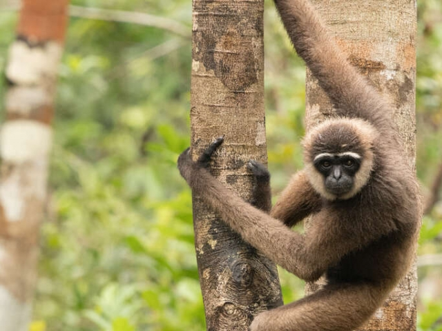 Agile Gibbon - Catch Me If You Can