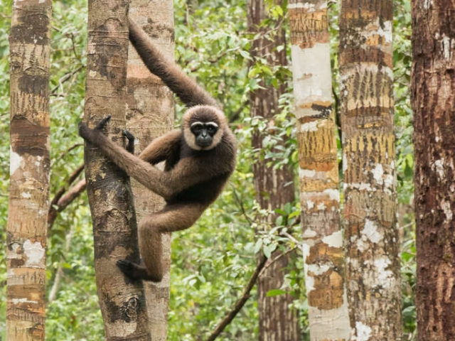 Agile Gibbon - Which Tree Next
