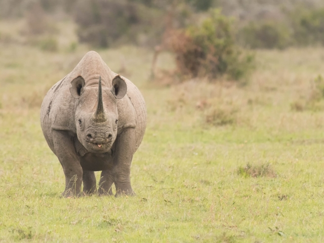 Black Rhino - Na na