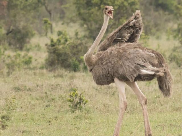Ostrich - Leave Me Alone