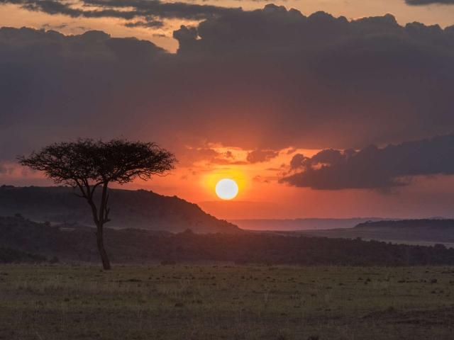 Masai Mara Acacia Sunset