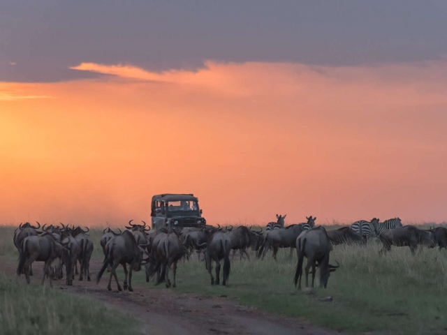 Wildebeest - Blocking the Road