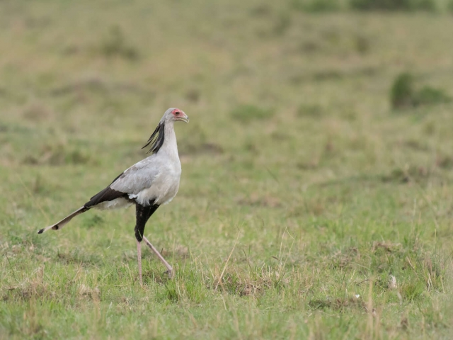 Secretary Bird - Next Assignment
