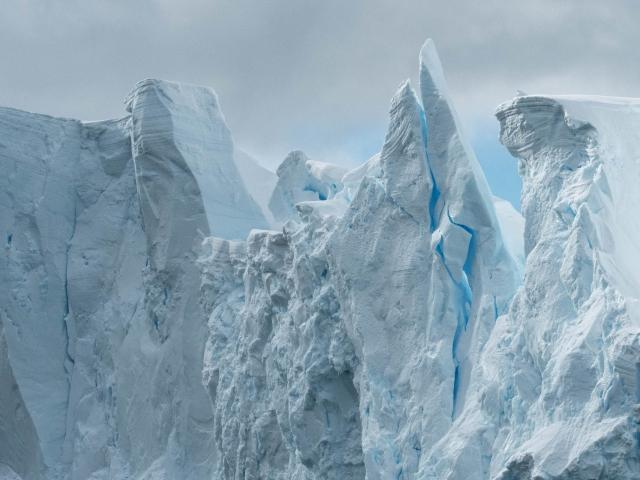 Iceberg - Blue Steeple
