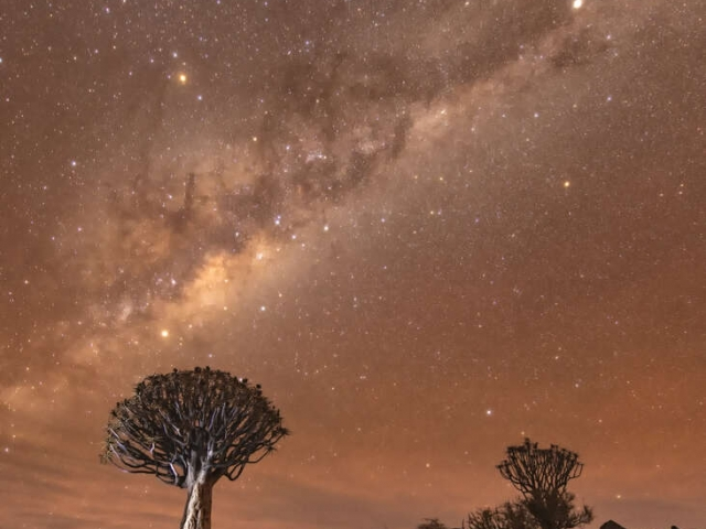 Quivertree Forest - Milky Way