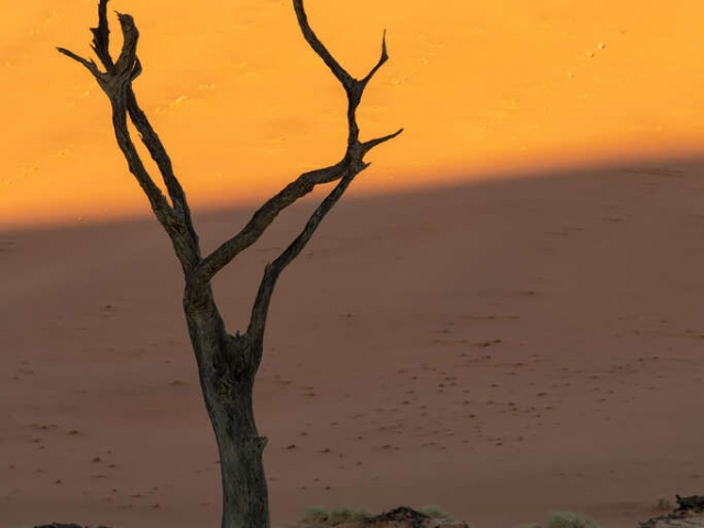 Deadvlei - Sunrise Portrait