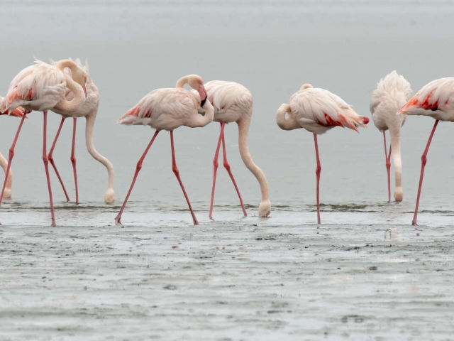 Flamingo - Fishing Group