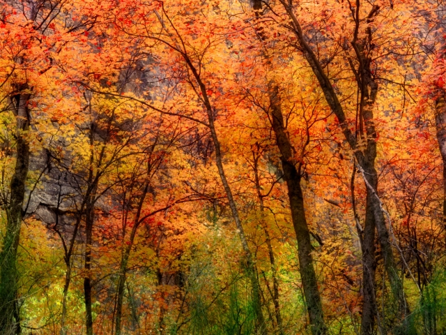 Autumn Colours, Zion (2)