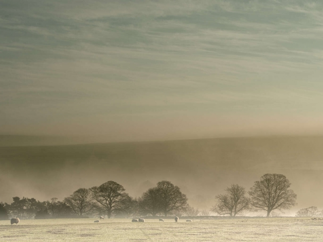 Morning Mist near Goathland