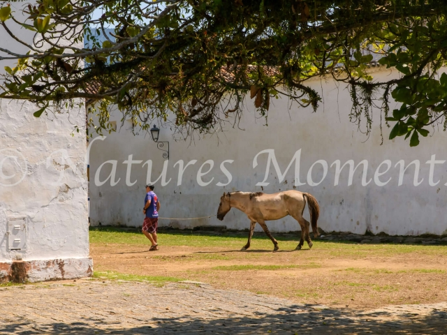 Paraty - Walking the Horse