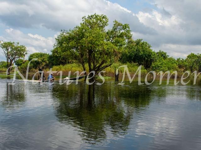Amazonian Reflections