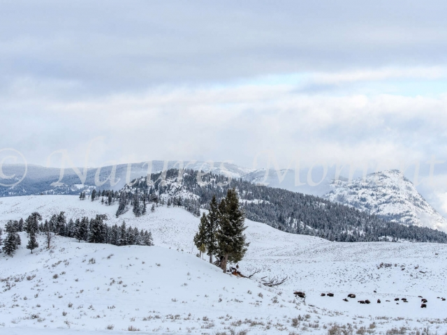 Lamar Valley - Snowy Mountains